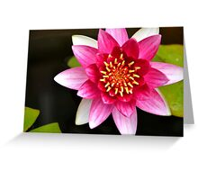 Pink Yellow Water Lily Green Lily Pads Floating on a Pond Greeting Card