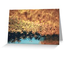 Mimosa pudica (Sensitive Plant)  Greeting Card