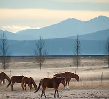 Wild Mountain Horses by Gregory Ballos | gregoryballosphoto.com