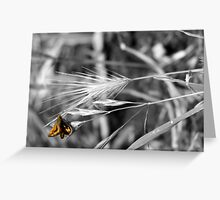 Orange Insect Greeting Card