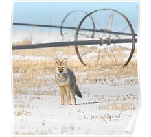 Coyote on the Prairies Poster