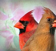 2014 with the Cardinals by Bonnie T.  Barry