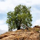 MAPUNGUBWE - A single tree by Magaret Meintjes