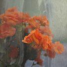 Orange flower by petejsmith