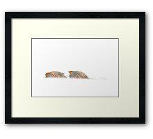Gray Partridge Framed Print