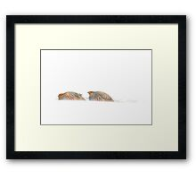 Gray Partridge Framed Print