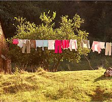 #SERIES - WEGRAAKBOSCH ORGANIC FARM - the washing line by Magaret Meintjes