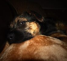 OLLIE ALL PLAYED OUT by leonie7