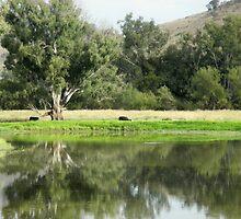 Rural Scene, Southern NSW, Australia. by kaysharp
