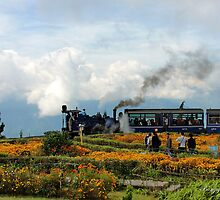 An old style locomotive train in Darjeeling by naveenbanga