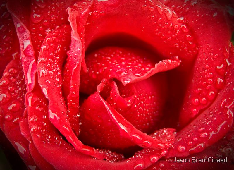 Rose After Rain by Jason Bran-Cinaed