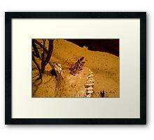 Locust mating Framed Print