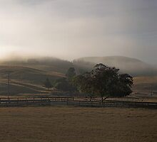New Zealand sleepy farm by David Haworth