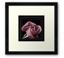 Rose black background square format Framed Print