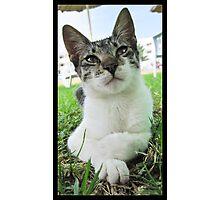 Tunisian Stray Kitten Photographic Print