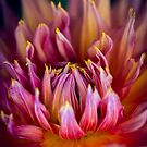 chrysanthemum by alan shapiro