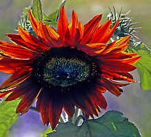 Summer Beauty - - Cards by Maria A. Barnowl