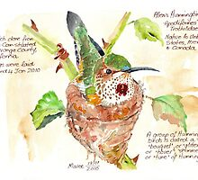 Phoebe, the Allen's Hummingbird by Maree  Clarkson