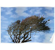 rugged tree blowing in the wind Poster