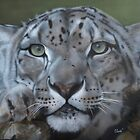 A SNOWY GAZE Featured in big cats group. by carss66