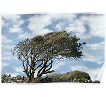 tree blown in the wind Poster