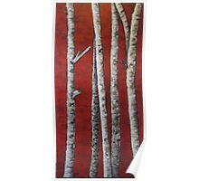 Birch #1 24x48 - Acrylic Poster