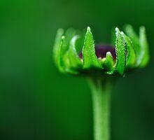Natures Crown by RyanLeePhoto