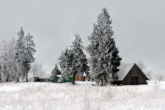 Lonely homestead in frost at 2011/01/28 winter by Antanas