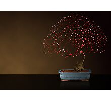 Red Bonsai Photographic Print