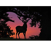 Red deer stag at dawn 2 Photographic Print