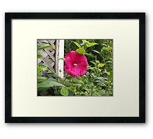 Red flower Framed Print