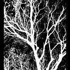Snowy Tree by Ginny Schmidt