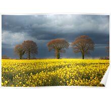 ~ Storm approaching rape field Poster