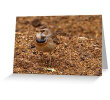 Little Poser - Bluethroat Greeting Card
