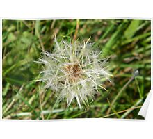 Dandilion Seed Poster