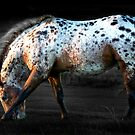 Appaloosa by Raymond Kerr