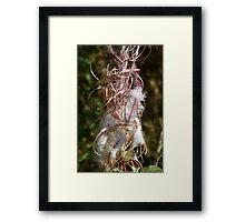 Wild Flower at Seed Framed Print