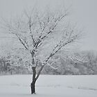 Snow-covered tree by mltrue