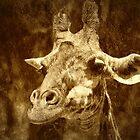 Giraffe Portrait by saseoche