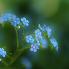 Just Dreamin' in Blue - Conservatory Flower by KatWolfe