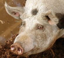 Happy As A Pig In Mud by sallydexter