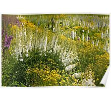 Cedar Creek Farms Delphinium Field Poster