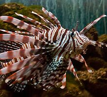 Lionfish Profile by ArianaMurphy
