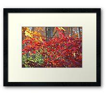Flaming Autumn  Framed Print
