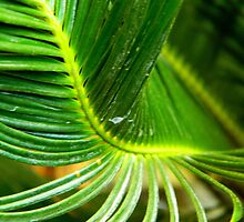 Abstract Leaf of Green   ^ by ctheworld