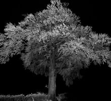 Tree at night canon speedlight and 5D by Smartvoice