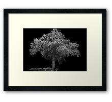 Tree at night canon speedlight and 5D Framed Print
