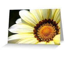 White Gazania Greeting Card