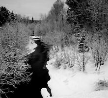 Winter black and white by tanmari