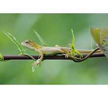 TEENAGER REPTILE Photographic Print